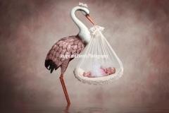 Newborn and Stork